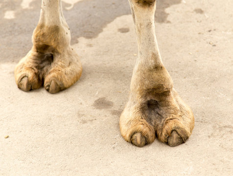Pics Of Camel Toes photo 2